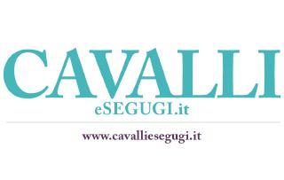 Cavalli & Segugi
